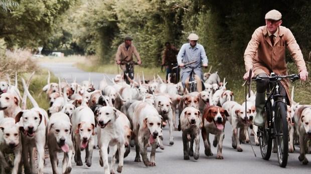 Stado psów na ulicy