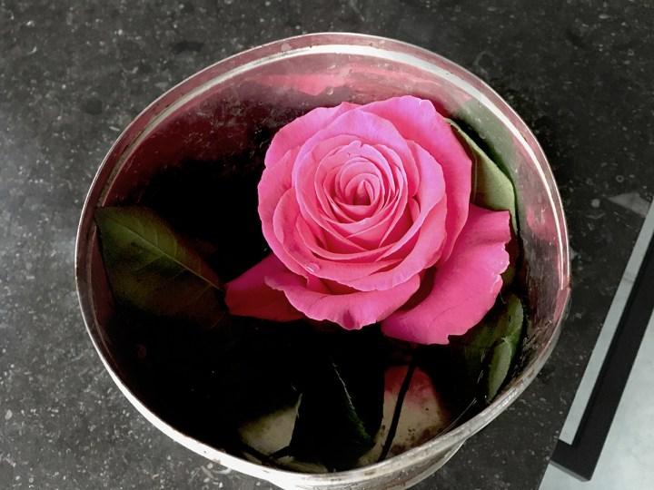 Zamrożone róże by Szymon Majewski