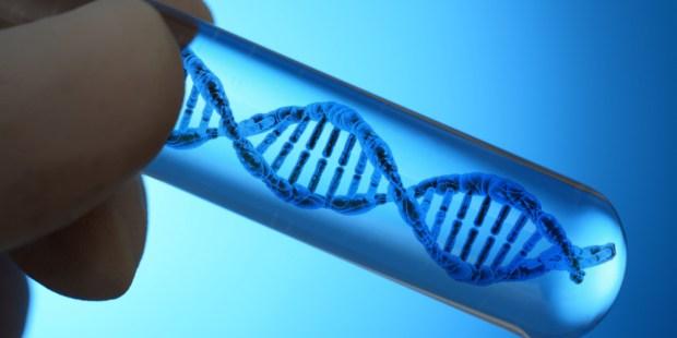 ADN ELICS