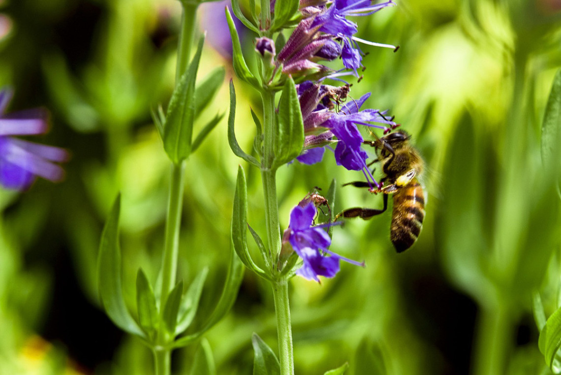 BEE ON PLANT