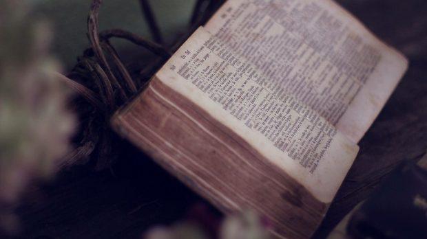 Otwarta Biblia wśród roślin