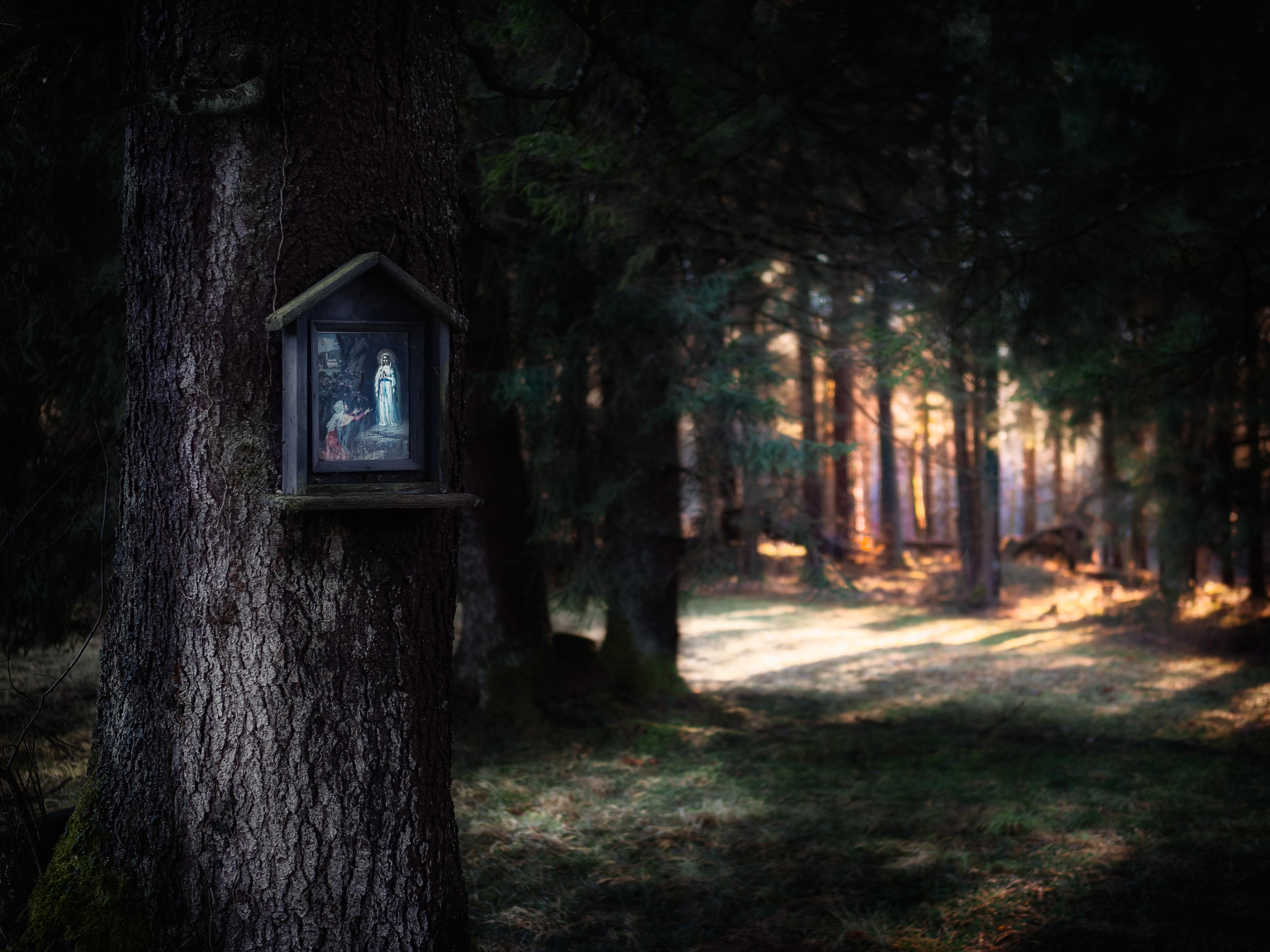 Kapliczka na drzewie w lesie