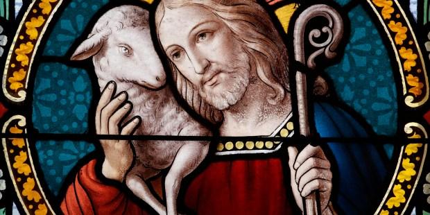 WEB2-JESUS-BERGER-SHEPARD-godong-fr492715a.jpg
